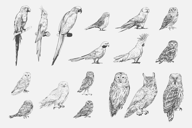 Illustration drawing style of parrot birds\ collection