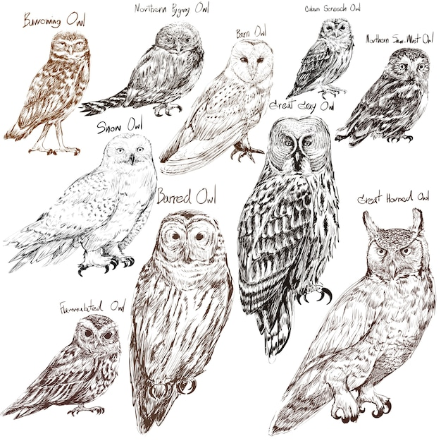 Illustration drawing style of owl birds collection Free Vector