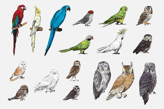 Illustration drawing style of parrot birds collection Free Vector