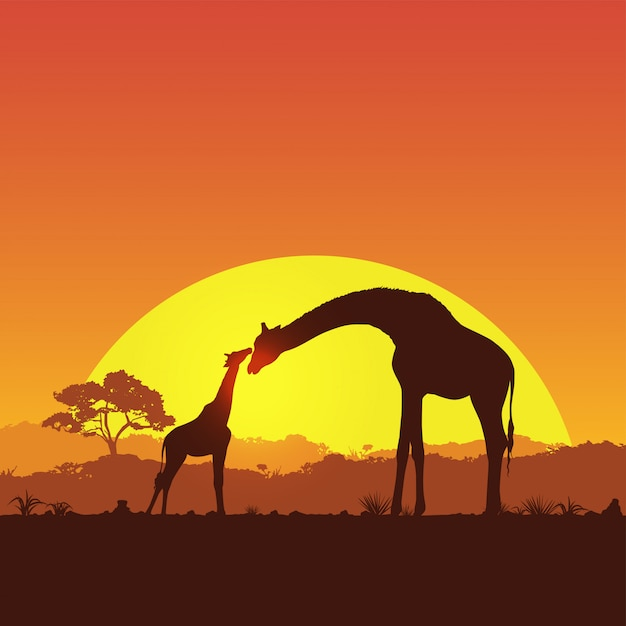 Illustration of giraffe mother and child in safari at sunset silhouette Premium Vector