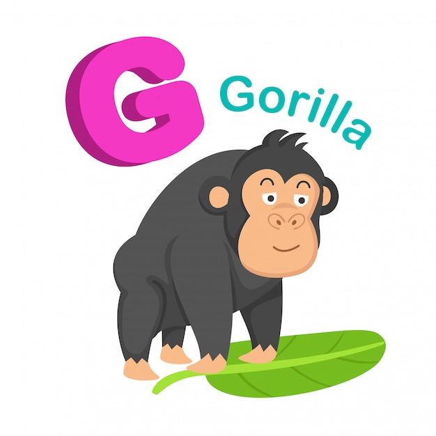 イラスト隔離されたアルファベットの手紙gゴリラ Premiumベクター