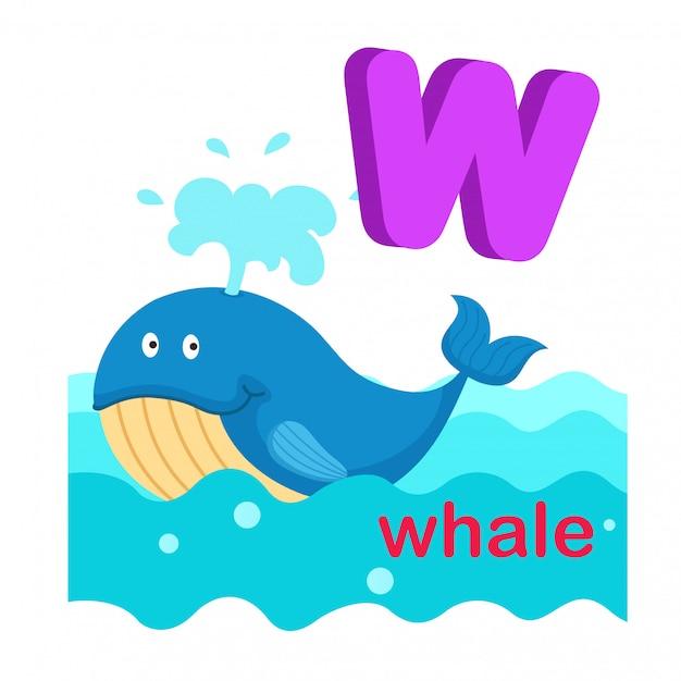 Illustration isolated alphabet letter w whale.vector Premium Vector