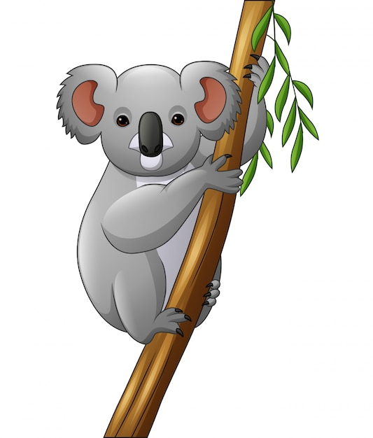 Illustration of koala on a tree branch Premium Vector