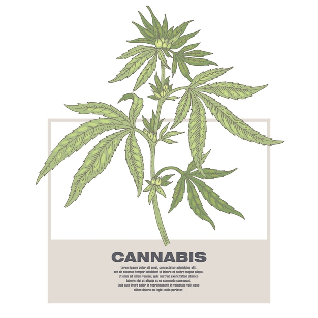 Illustration of medical herbs cannabis. Premium Vector