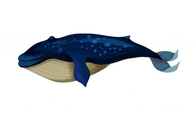 分離された大きなシロナガスクジラのイラスト。 Premiumベクター