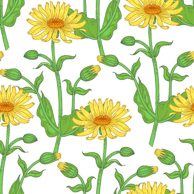 Иллюстрация арники. бесшовные модели. цветы лекарственных растений на белом фоне. Premium векторы