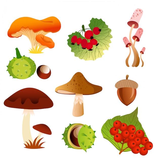 Иллюстрация иконы осенней природы листопада и сезонные грибы, ягоды и орехи дуба желудь в яркие цвета и плоский дизайн. Premium векторы