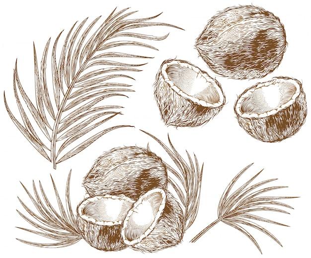 ココナッツとヤシの葉のイラスト 無料ベクター