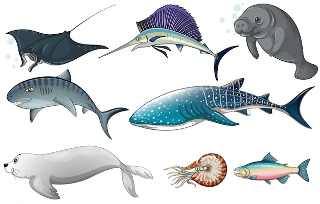 Illustration of different kind of ocean\ creatures