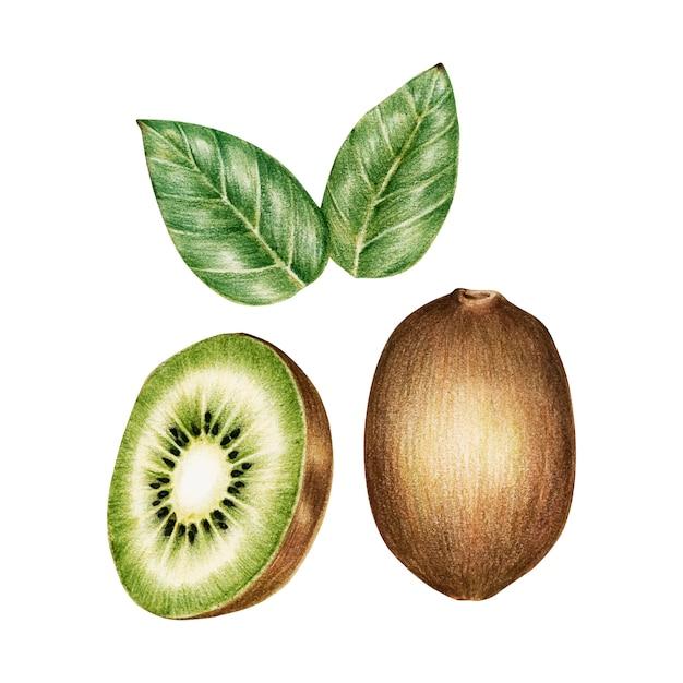 果物の水彩画のイラスト 無料ベクター
