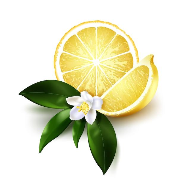 Иллюстрация ломтика и половины сочного лимона с зелеными листьями и белым цветком на белом фоне. реалистичные цитрусовые Premium векторы