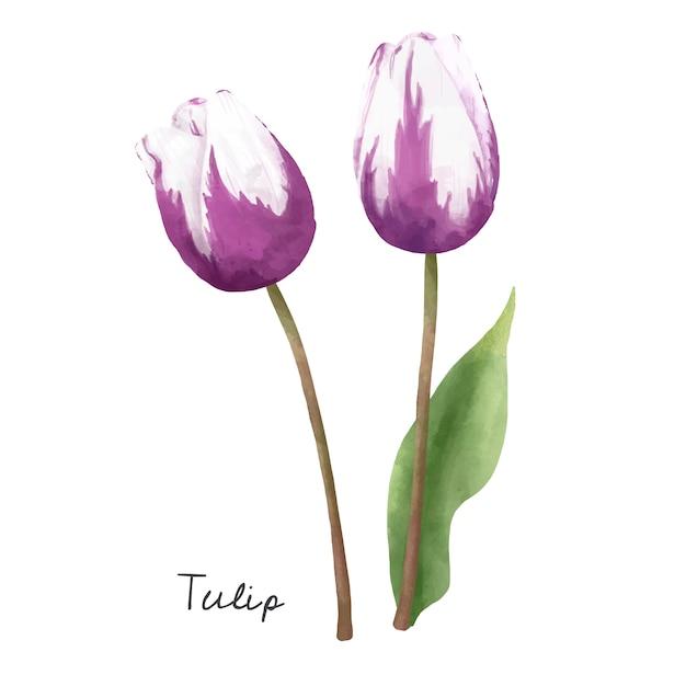 白い背景に隔離されたチューリップの花のイラスト。 無料ベクター