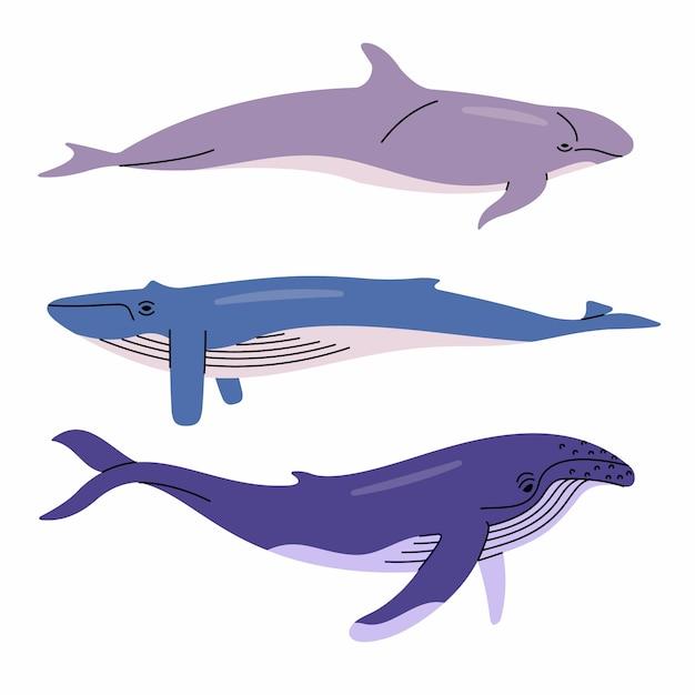 Иллюстрация китов. ложный косатка, синий кит, горбатый кит. белый фон. Premium векторы