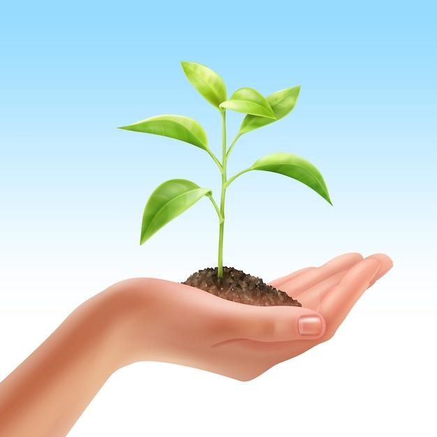 Иллюстрация молодого свежего растения в человеческой руке Бесплатные векторы