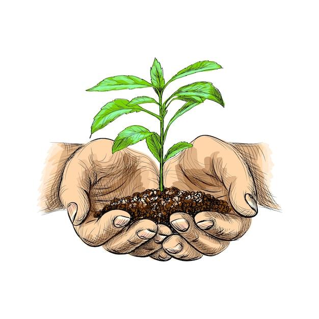 手で地面を持つ若い植物のイラスト。白い背景の上のスケッチスタイルで芽を保持しているヤシの木 Premiumベクター