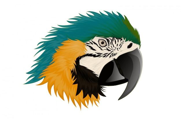 Иллюстрация реалистичные попугаи ара Premium векторы