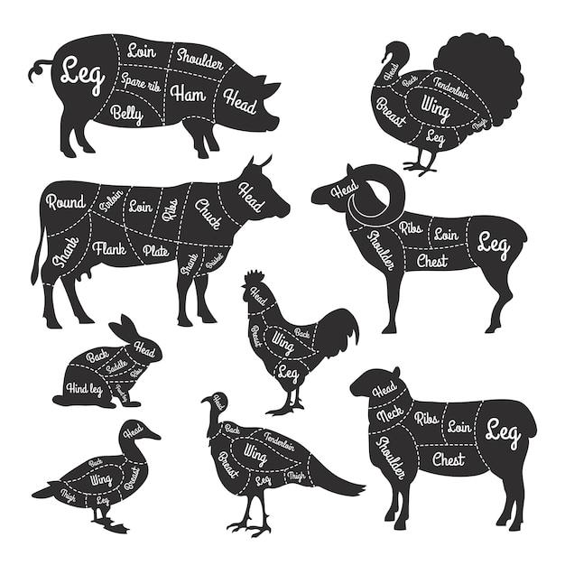 Illustrations for butcher shop Premium Vector