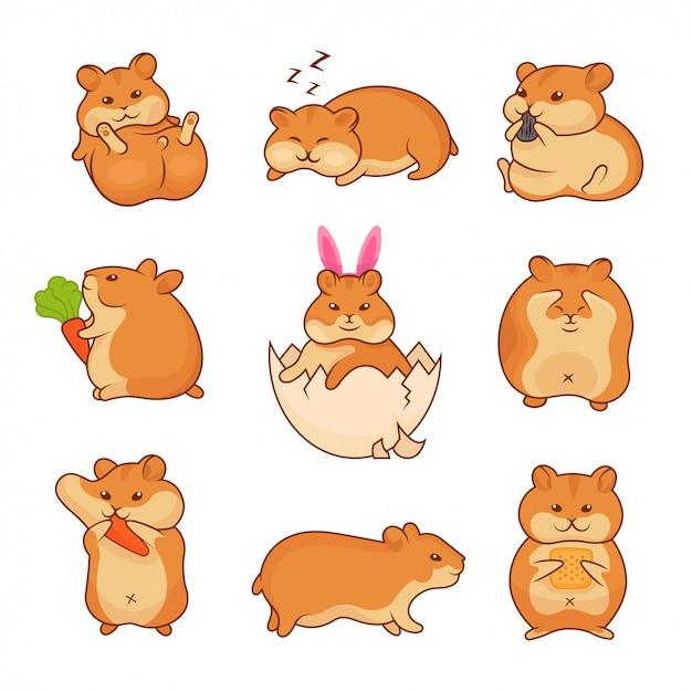 Illustrations of golden hamsters Premium Vector