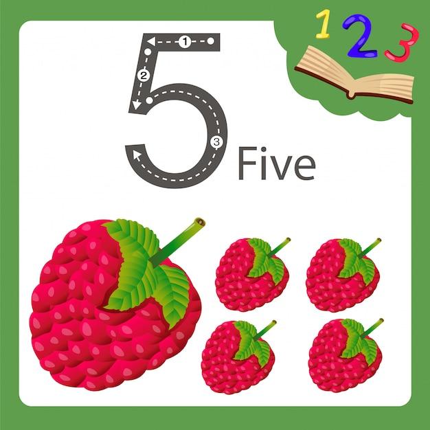 Illustrator of five number raspberry Premium Vector