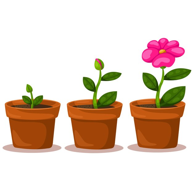 Illustrator flower of growth Premium Vector
