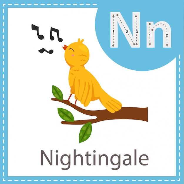 Illustrator of nightingale bird Premium Vector