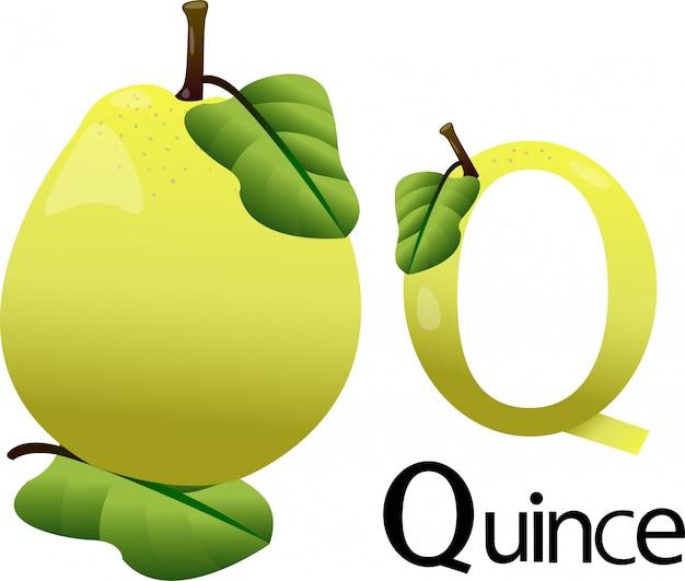 Illustrator q font with quince Premium Vector