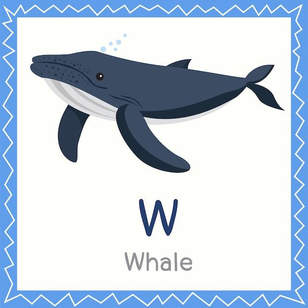 Illustrator of w for whale animal Premium Vector