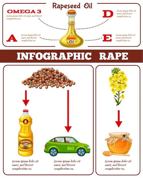 유채 기름 혜택 강간 인포 그래픽 프리미엄 벡터