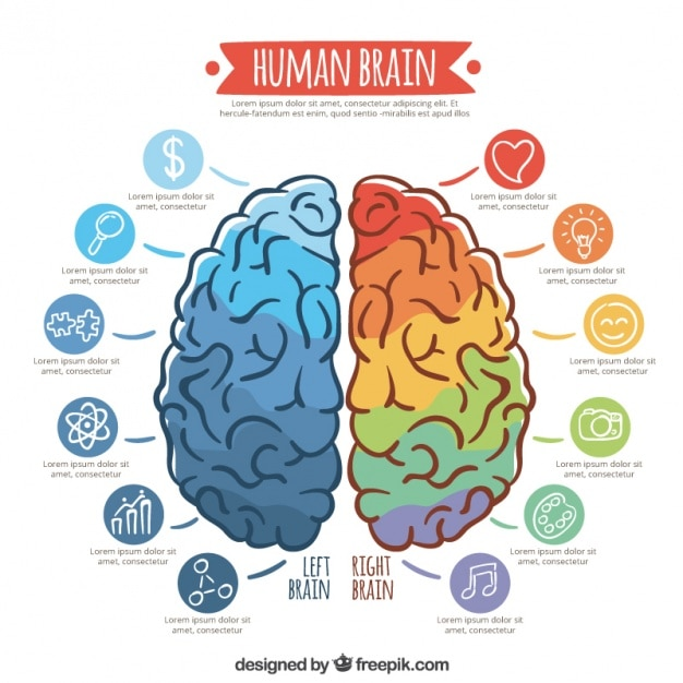 Infographic template of colorful brain Free Vector