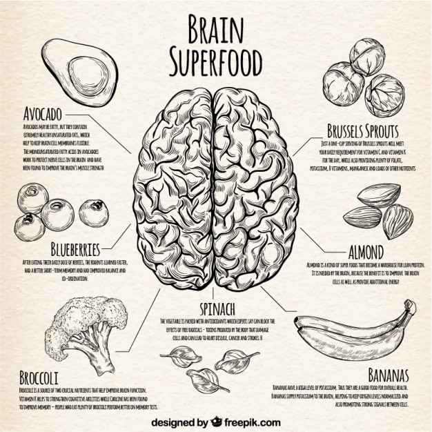 Infographic with the best food for the brain Free Vector