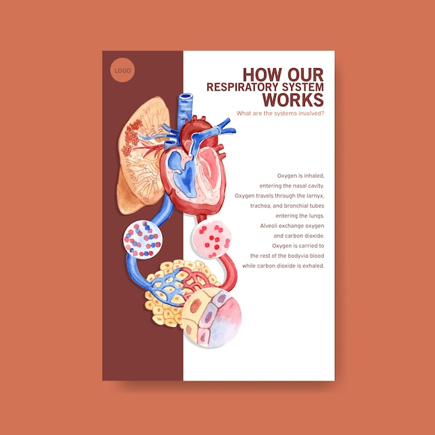 Information about anatomy of the respiratory system and understanding an essential system Free Vector