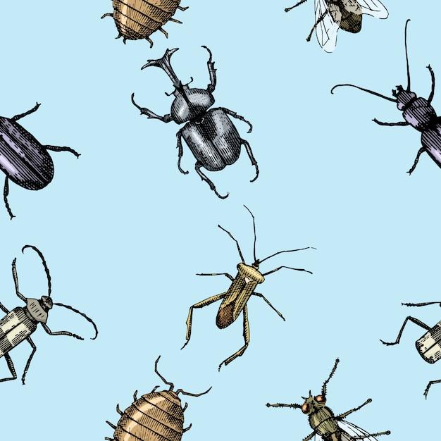 Жук-насекомое бесшовные модели, фон с выгравированным животным рисованной стиль Premium векторы