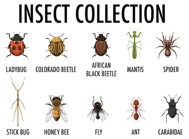 Insect collection isolated Free Vector