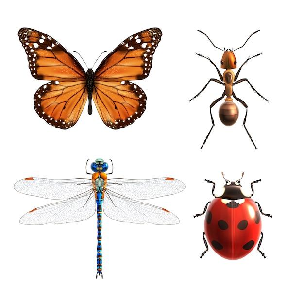 昆虫の現実的なセット 無料ベクター