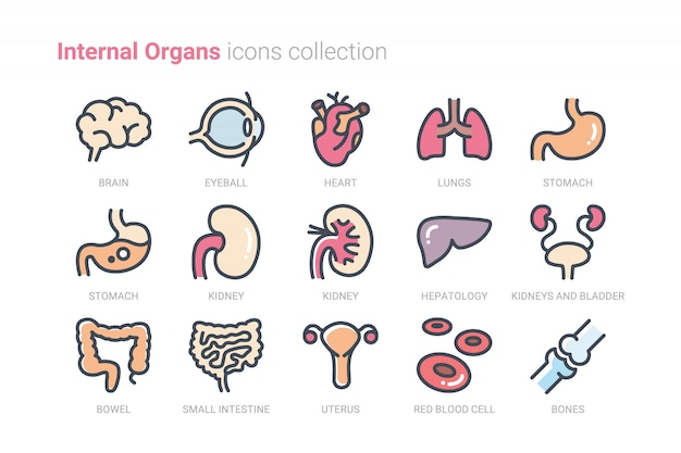 Internal organs icons collection Premium Vector