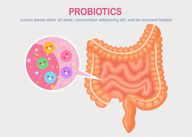 창자, 흰색 바탕에 내장 식물입니다. 소화기 계통, 귀여운 박테리아, 프로바이오틱스, 바이러스, 미생물이있는 관. 의학, 생물학 개념. 결장, 장 프리미엄 벡터