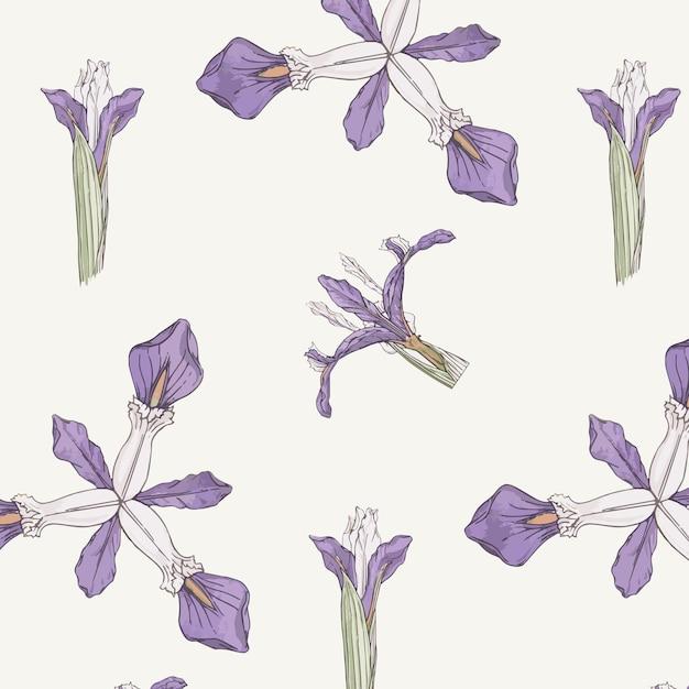 Iris flower pattern Free Vector