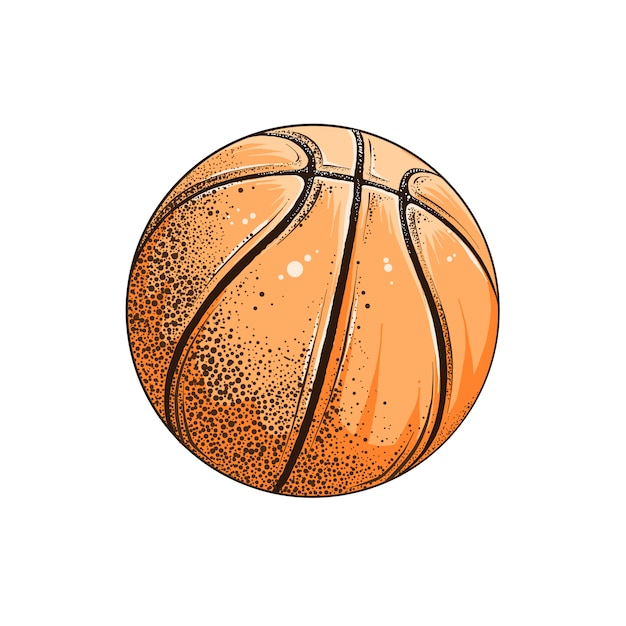 Isolated drawing of basketball ball in color. Premium Vector