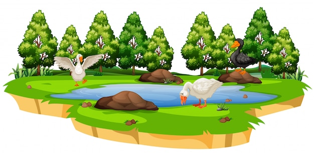 Isolated duck at pond Free Vector