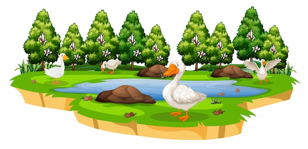 An isolated duck pond Premium Vector