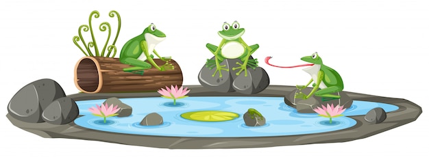 Isolated frog in the pond Premium Vector