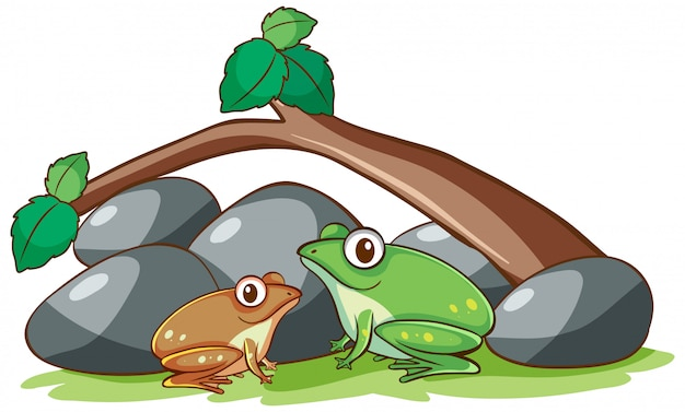 Изолированная рука нарисованная 2 лягушек под ветвью Бесплатные векторы