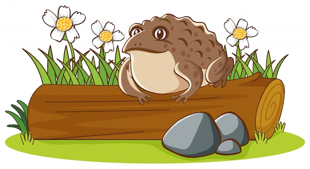 Isolated picture of big toad on log Free Vector
