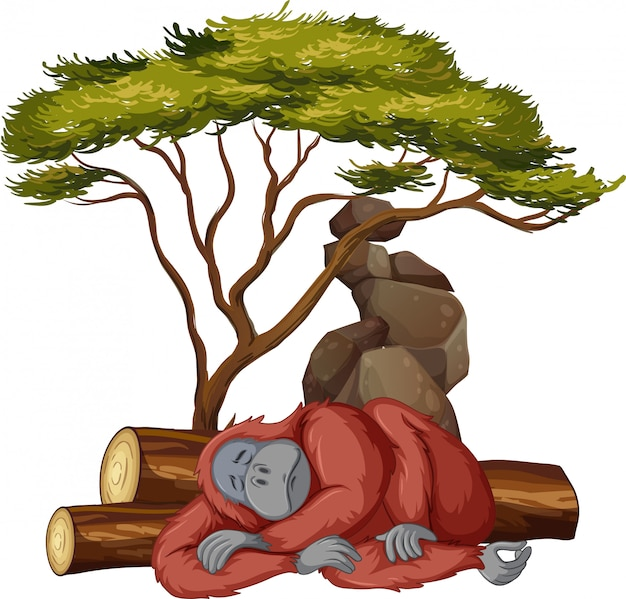 Isolated picture of gorilla sleeping Free Vector