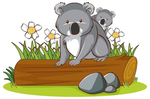 Isolated picture of koala on log Free Vector
