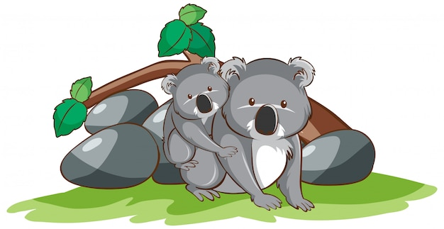 Isolated picture of koala Free Vector