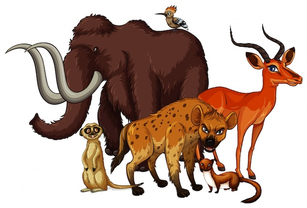 Isolated picture of many animals Free Vector