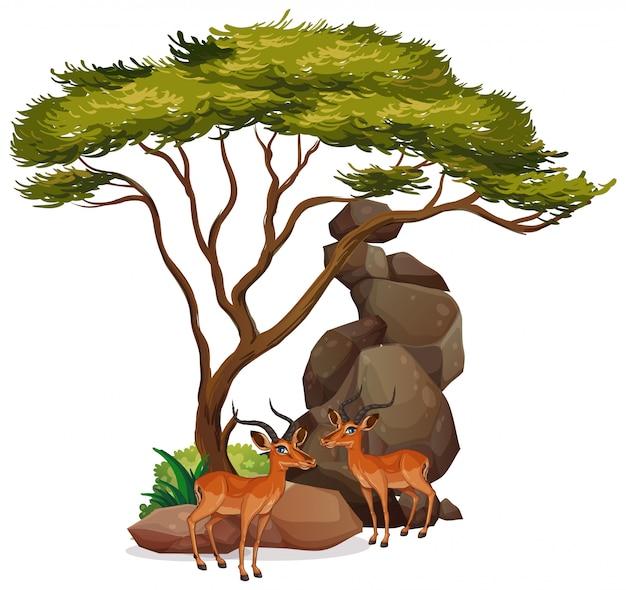 Изолированное изображение газелей под деревом Бесплатные векторы