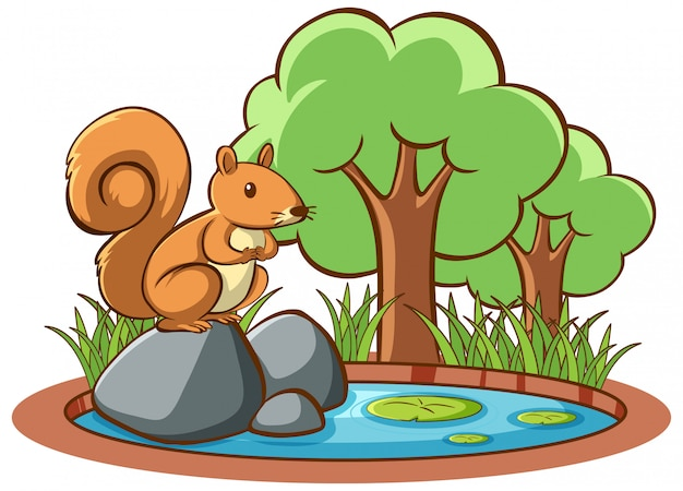 Isolated picture of squirrel in garden Free Vector