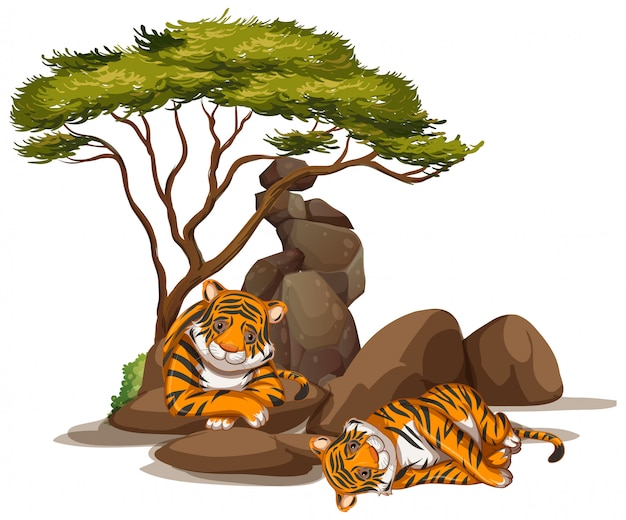 Isolated picture of two tigers under the trees Free Vector